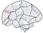 Comm Pharm Blank Brain Entry 14