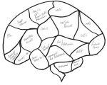 Community Pharmacist Blank Brain Entry number 8